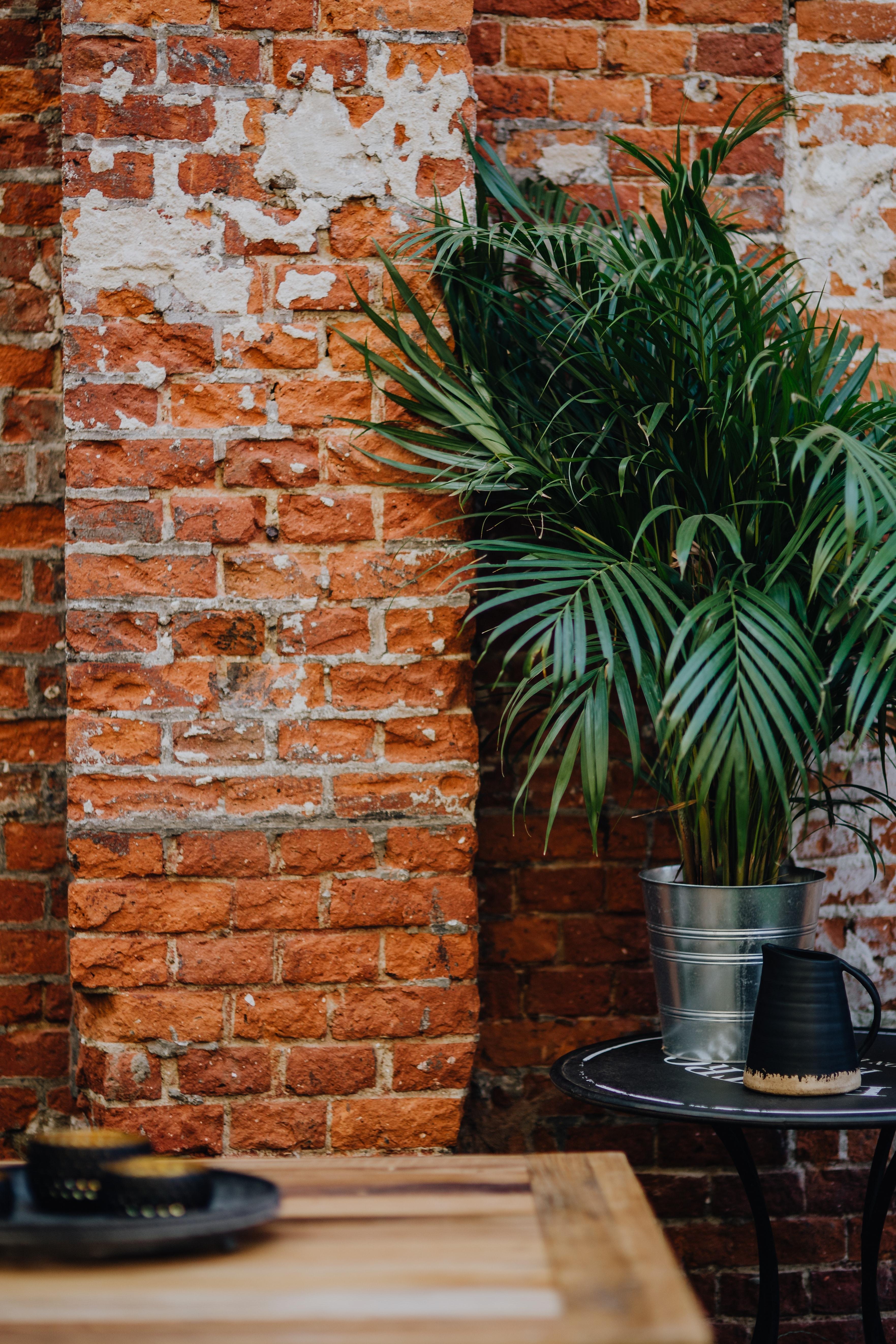 trendy w aranżacji wnętrz - rośliny zielone we wnętrzu